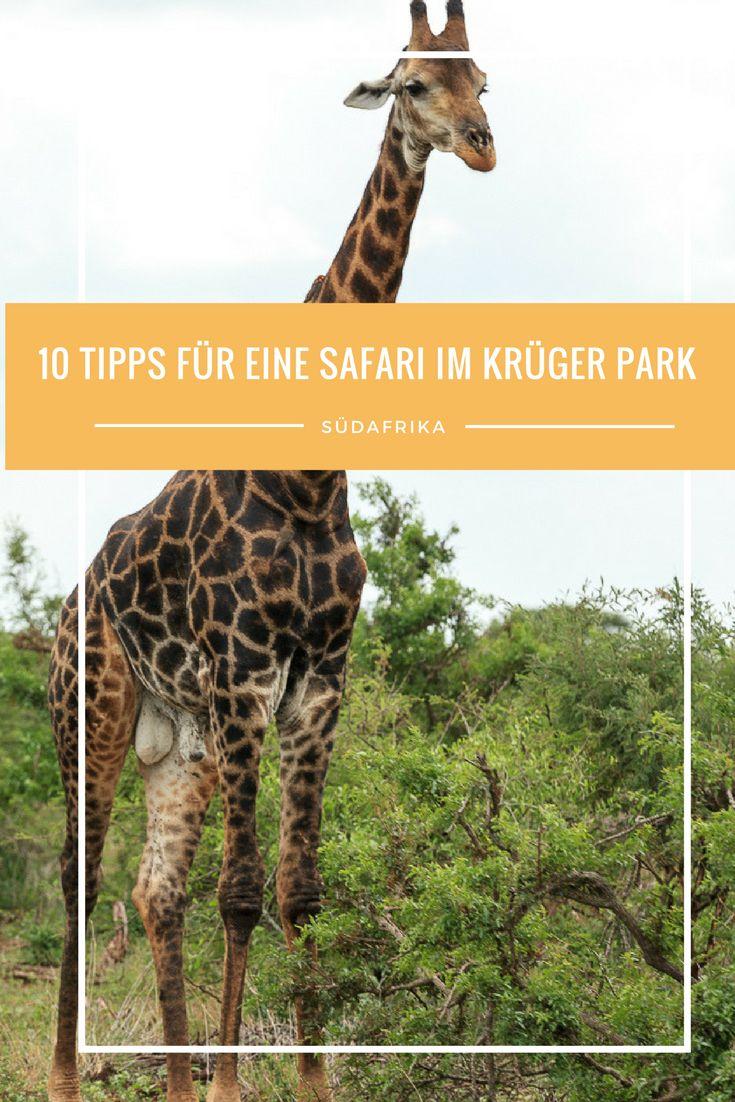 10 Tipps für eine Safari im Krüger National Park in Südafrika. Alles über gute Lodges, Hotels, die passende Kleidung und den richtigen Anbieter. Welcher Flughafen soll genutzt werden? Oder lieber doch nach Botswana, Kenia oder Simbabwe reisen?