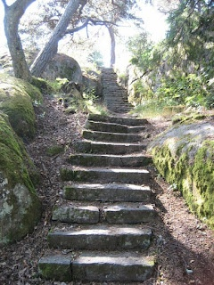 Forest steps in Hanko Finland (photo Janita S)