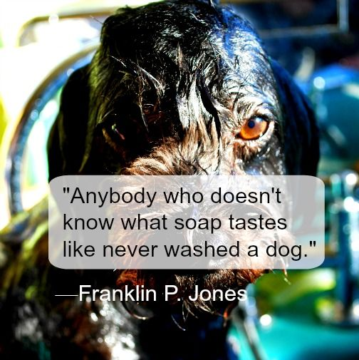 """Pooch Inspiration 