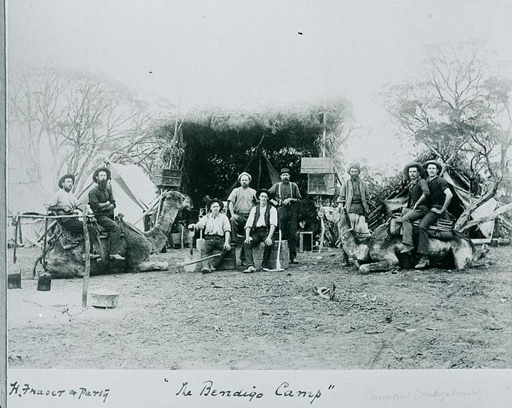 Gold prospectors and camels Bendigo camp 1851