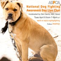 National Dog Fighting Awareness Day: Spread the Word! http://www.babble.com/pets/national-dog-fighting-awareness-day-how-you-can-help/ #dogs #Dogfighting #pets #animalcruelty #pitbulls