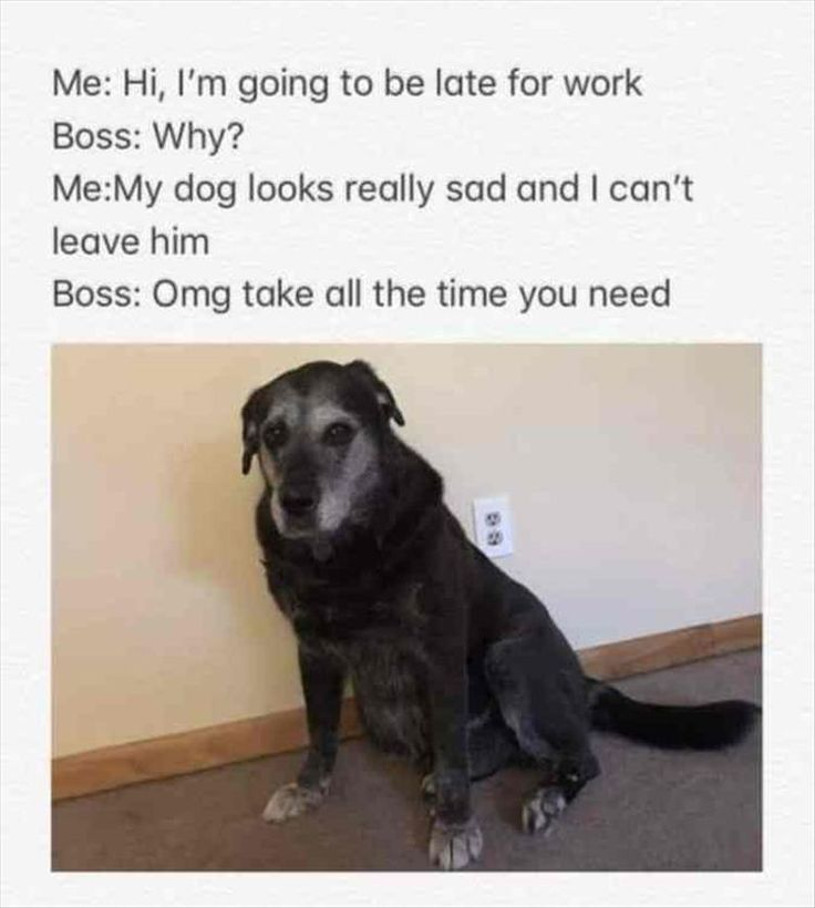 Funny Animal Picture Dump Of The Day 24 Pics: Best 25+ Veterinarian Quotes Ideas On Pinterest
