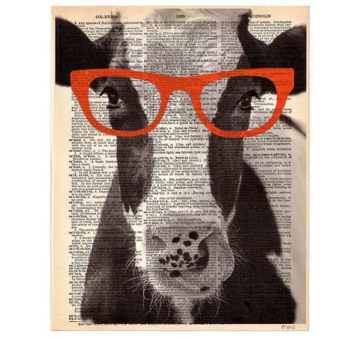 Pretty COW Glasses ORIGINAL Art Print Farm Animal Vegan Mixed Media Paint Illustration on Upcycled Antique English Dictionary Book Page 8x10. $10.00, via Etsy.