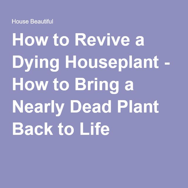 how to bring a dead plant back to life 17 best images