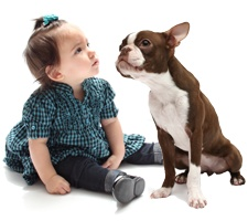 Top 20 Dogs for Kids.