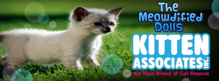 #FactFriday: this month we are supporting Kitten Associates, they are the new Breed of Cat #Rescue. Not only do they help kittens and #cats from high risk situations, such as death row at Kill Shelters, but they also provide Web Based Communication Tools for small, struggling Rescue Groups & Animal Shelters. For more information about this great #charity, visit their Facebook page or website: http://www.kittenassociates.org/ #ModifiedDolls #NonProfit #SuportingCharities #RaisingAwareness