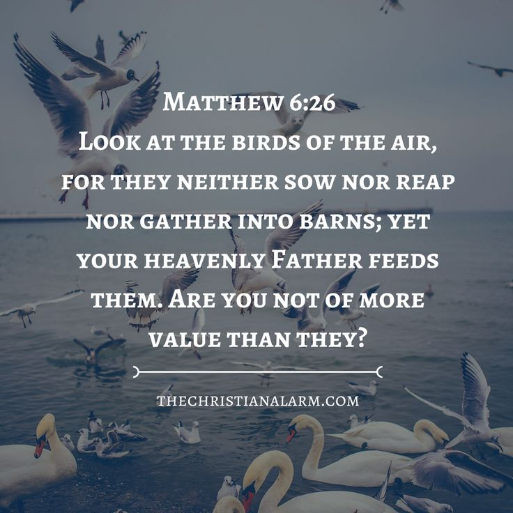Matthew 6:26 Are you not of more value than they? Bible scripture. Bible verses. Faith. Christian encouragement