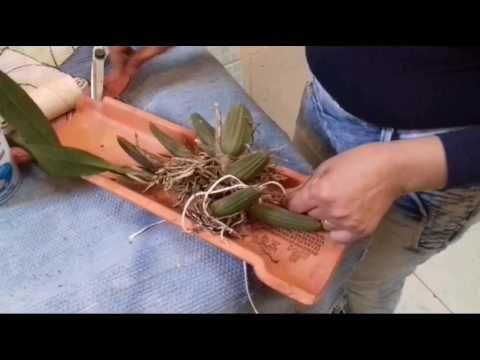 plantando orquídeas em telha! - YouTube