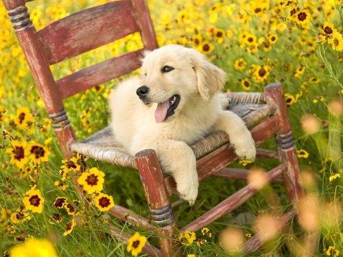 Sun Flower Background