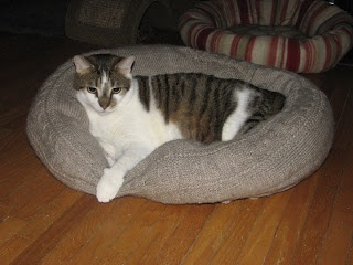 Old sweater into a cat bed. DIY
