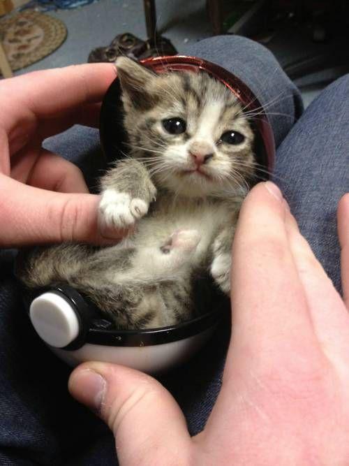 kitty in a Pokemon ball. awwwww