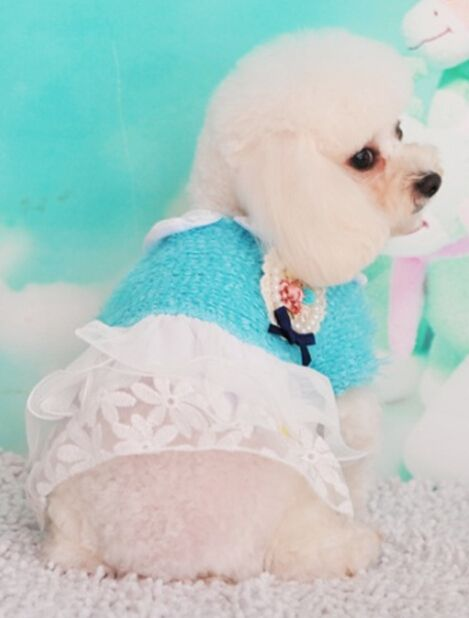 Домашнее животное платье домашнее животное одежда домашнее животное продукты собака платье собака одежда качая толстовка