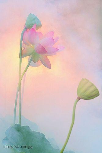 Flower | Flickr : partage de photos !