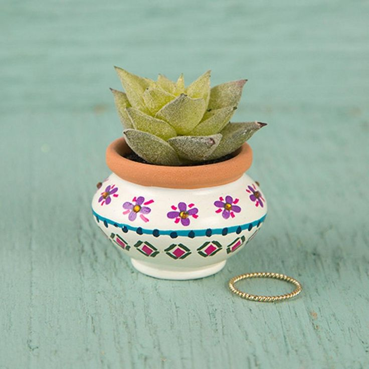 Natural Life Succulent Keepsake Desk Plant - Cream, Purple, and Navy