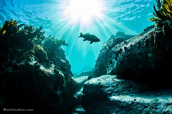 Sydney sea-life