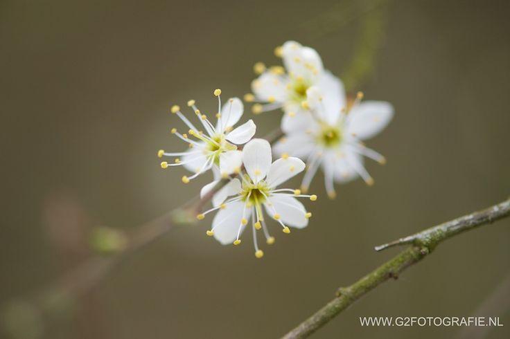 spring, flower, white, blossom