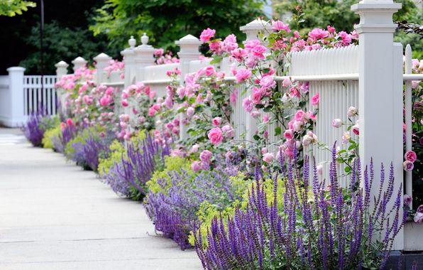 pnk blue flower garden | ... garden fence, fence, white, flowers, flower, rose, pink, blue, yellow