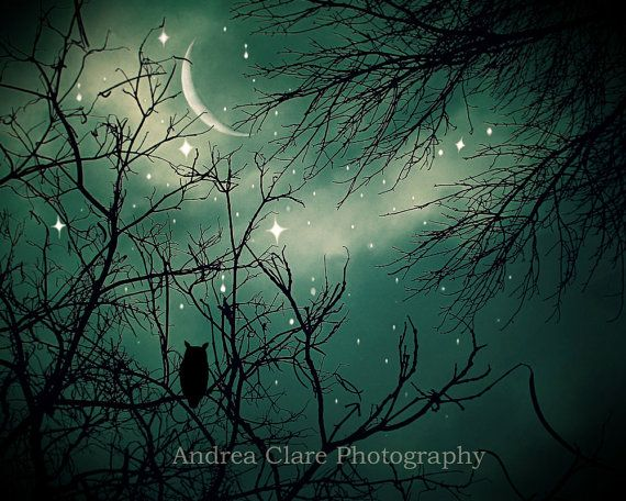 Stardust Fine Art Photograph Nature 8x10 Owl Moon