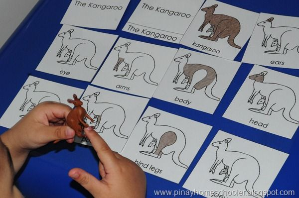 Kangaroo Nomenclature Card from Montessori Print Shop - These cards could then be included in your Kangaroo Unit Study Lapbook