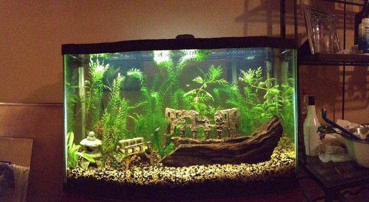 My 29 gallon tropical planted aquarium. Aquarium Pinterest