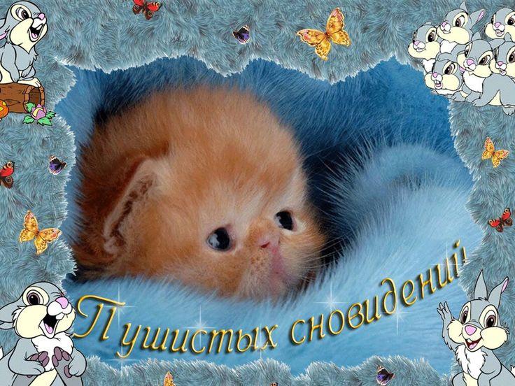 Открытки приятных сновидений с котятами, картинки