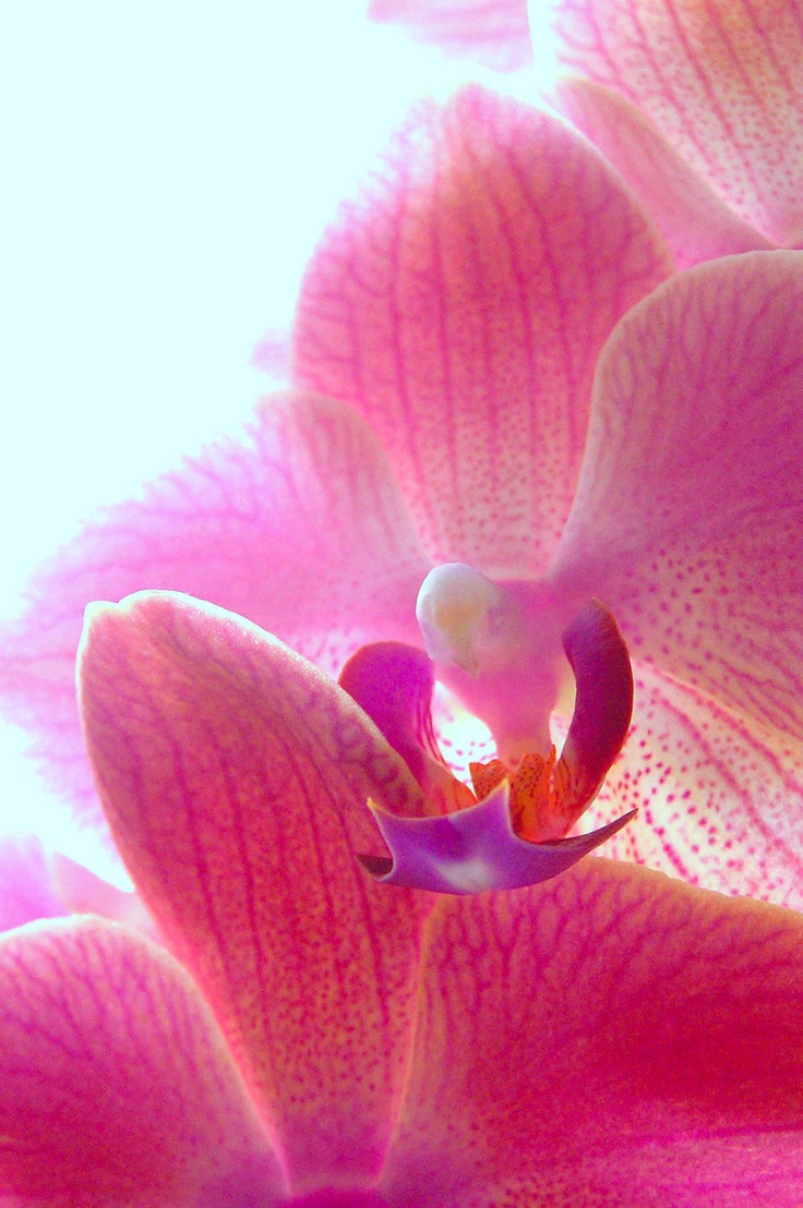Orchid meireis pink pinterest messages and orchids