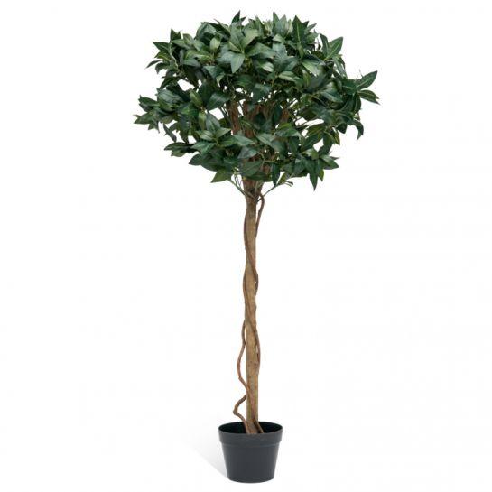 Bay Topiary Tree
