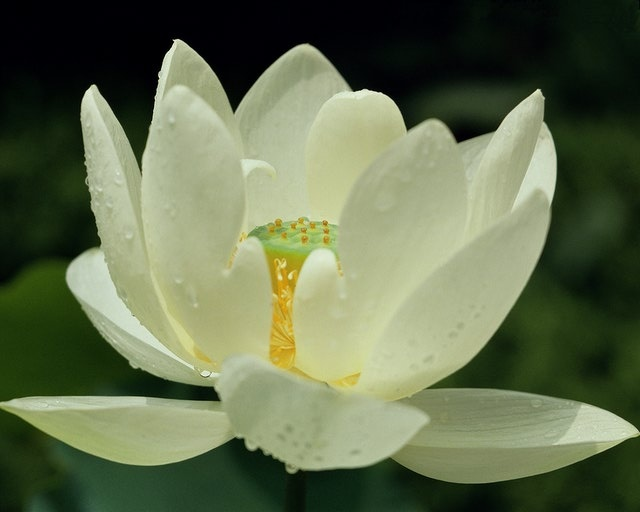 Interdependence between the lotus and the sun is a symbol of love.