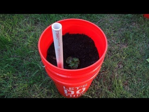 EASIEST How to make Self Watering, Sub Irrigated Planters, with 5 Gallon Bucket & Milk Jug - YouTube
