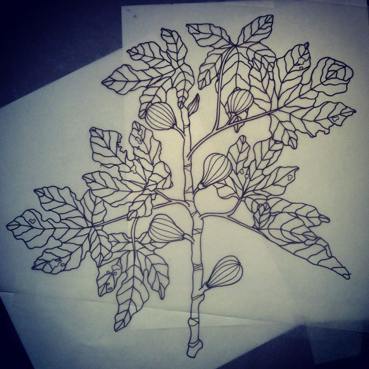 Fig leaf tattoo tattoo ideas pinterest leaf tattoos for Fig tree tattoo