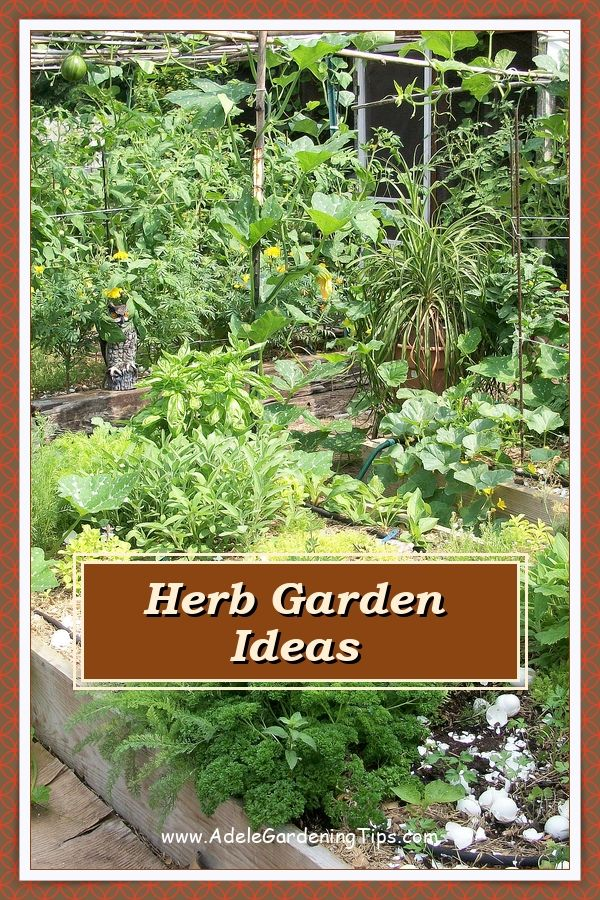 How Often Should I Water My Herb Garden Growing Organic Herbs Herb Garden Herbs Indoors