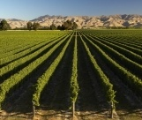 A nice perspective on New Zealand wine