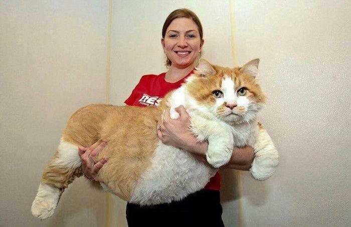 gatos_gigantes_2