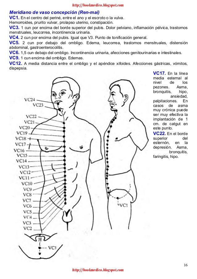 25 best anatomía images on Pinterest   Human anatomy, Anatomy and ...