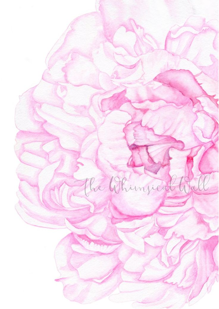 The Whimsical Wall — Peony Art Print
