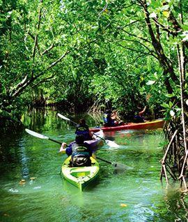 シーカヤックで洞窟やマングローブを探検。パラオ旅行の観光スポットまとめ。