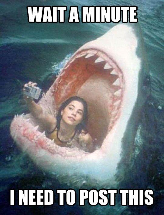 Hold on, shark…
