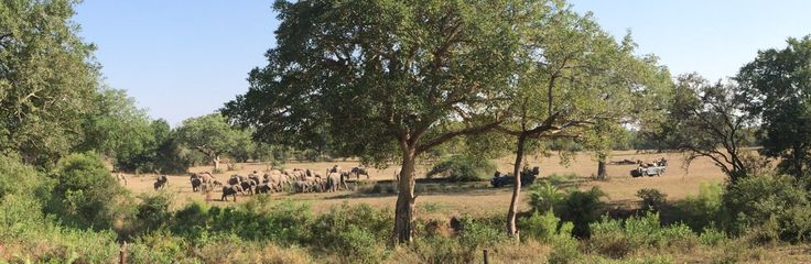 A herd of approximately 150 elephants enjoyed a drink at the pan in front of Bush Lodge. PhonePic by Rod Wyndham
