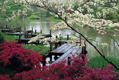 Japanese Garden, missouri botanical Garden! so pretty in the Spring, I want to return every season!