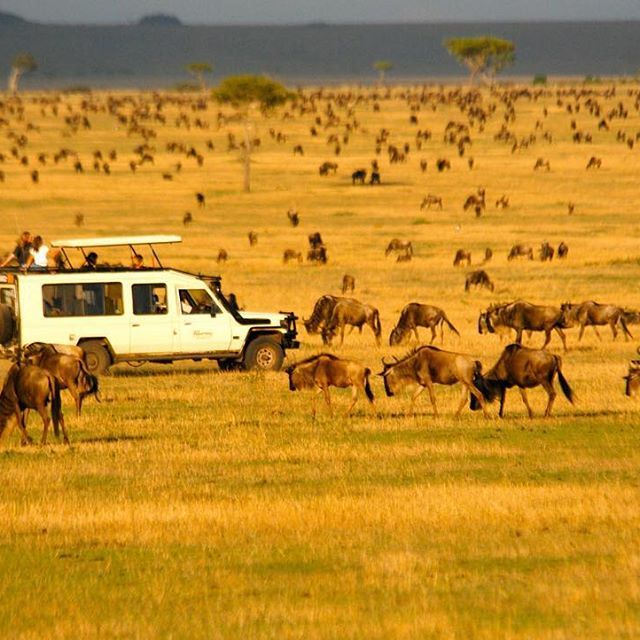 Join the herds of the #GreatMigration on a #WildFrontiers safari to the #Serengeti in #Tanzania.   Go to www.wildfrontiers.com to see our deals!   #safari #Africa