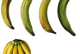 "Bananas and plantains make up staples in several worldwide cuisines, and their popularity makes bananas -- a general term that includes plantains -- the fourth most abundant fruit crop in the world, according to Purdue University. In the United States, ""banana"" refers to the sweet, pale yellow fruit that can be consumed raw, while..."