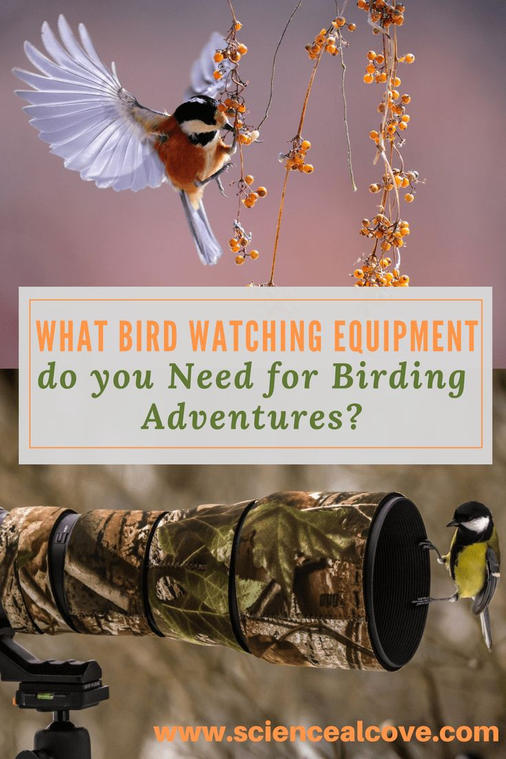 Bird watching equipment is a must for even the backyard observer. A field guide, binoculars and camera with stand can suffice for the back yard, bird feeder enthusiast. If you are an extreme birdwatcher, then your bird watching equipment needs will be a bit more complex. #birds #birdwatching #birdwatchingequipment #affiliatelinks