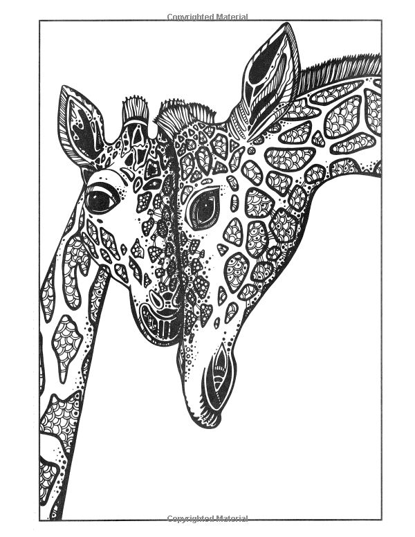 Adult Coloring Book Giraffe Sketch Page