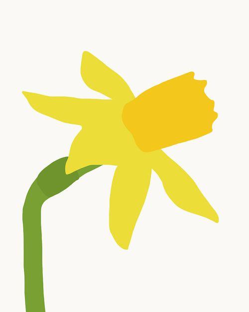 Daffodil at Trader Joe's, Jorey Hurley