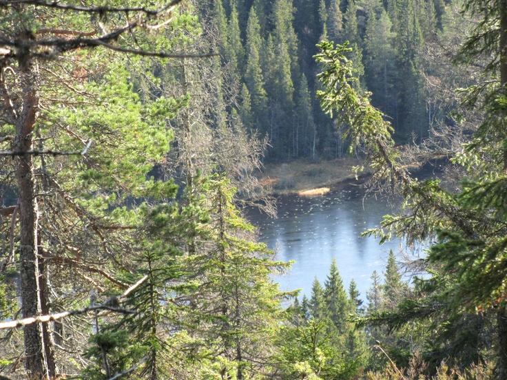 Skuleskogen ingår i Världsarvet Höga Kusten