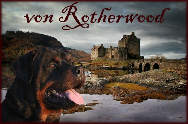 ROTHERWOOD KENNEL Rottweiler Breeder in Ontario Canada - show and pet quality puppies for sale, CKC registered (Near Hamilton)
