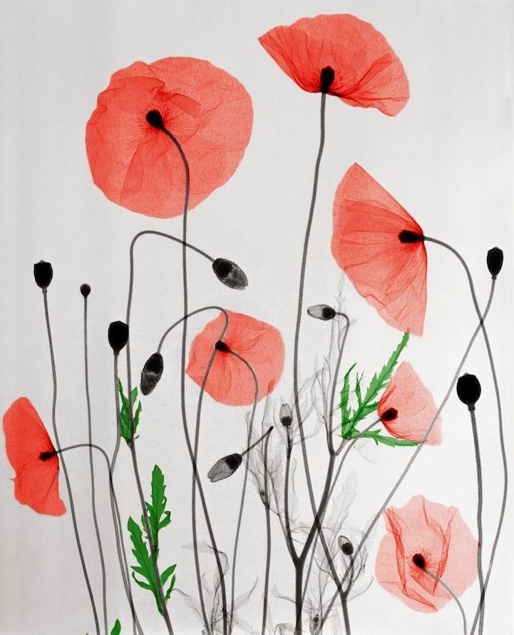 ALLPE Medio Ambiente Blog Medioambiente.org : Los bioramas de Arie van 't Riet (rayos X, color y mucho talento)