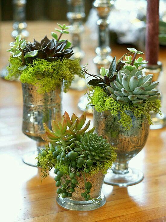 Succulents in glasses sprayed with mirror spray.                                                                                                                                                                                 More