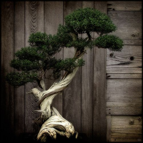 Bonsai tree on Find your joy in the dark. tumblr