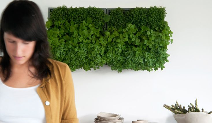 planters that can be fixed to a wall, great way to grow herbs in your kitchen, or brighten up a blind wall. Made out of recycled materials. Karoo - Belgian design for you.
